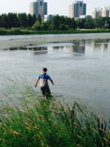 Kelsey treading into Wascana Marsh to retrieve a turtle!